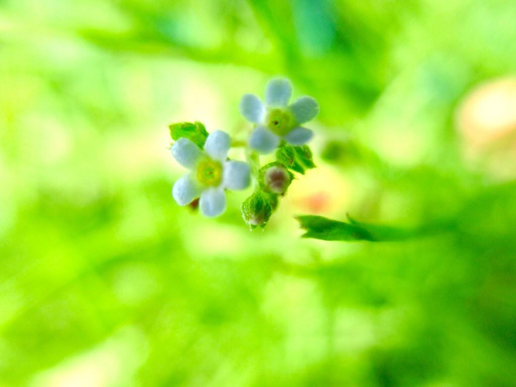 1センチの花の宇宙